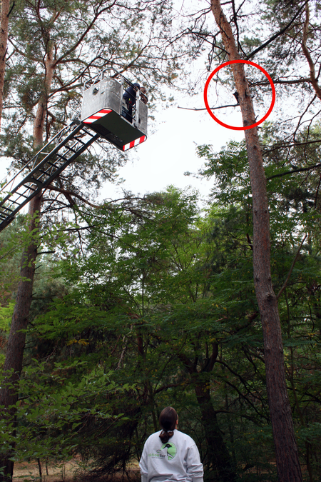 Tierheimmitarbeiterin Michaela Gebhardt und die Freiwillige Feuerwehr Wünsdorf retten die Katze vom Baum.