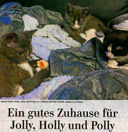 07. Februar 2019   MAZ   Ein gutes Zuhause für Jolly, Holly und Polly