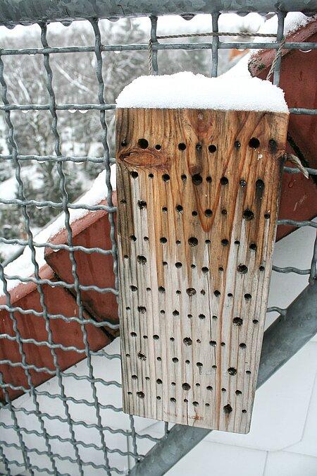 Im Winter ruhen die Wildbienen als Puppen in den Brutröhren.