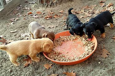 Die beschlagnahmten Welpen im Tierheim aktion tier ZOSSEN.