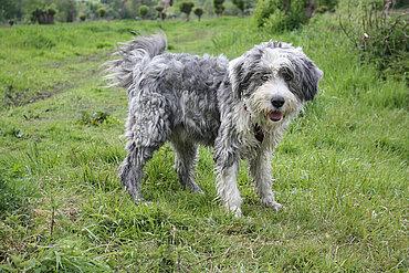Nasser Hund. Foto: © Ursula Bauer