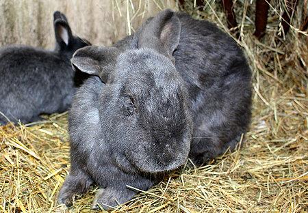 Krankes Kaninchen im Holzschuppen