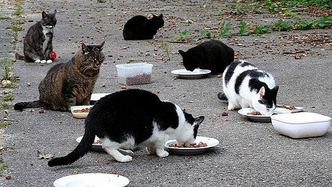 Straßenkatzen an der Futterstelle eines Kitty-Forums.