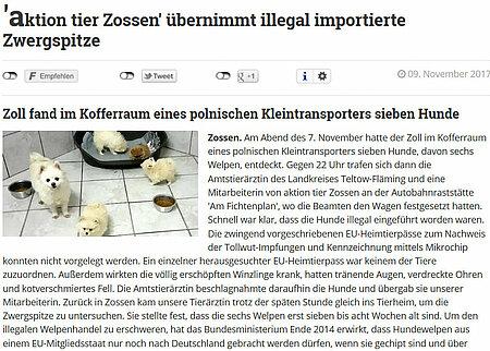 """10. November 2017   Blickpunkt Zossen   """"aktion tier Zossen"""" übernimmt illegal importierte Zwergspitze"""