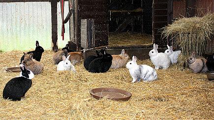 Kaninchen im Holzschuppen in Neu Lübbenau