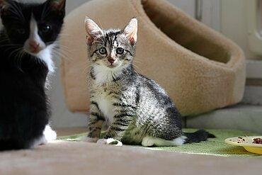 Katzenkind im aktion tier Tierheim Zossen