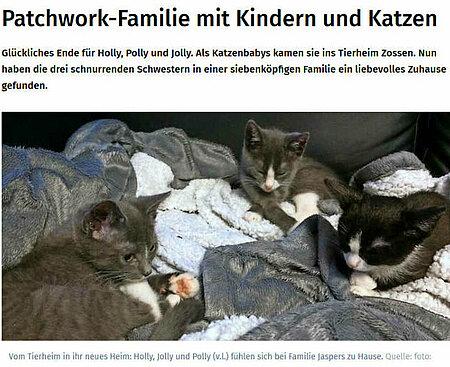 06. Februar 2019   Märkische Allgemeine Zeitung   Patchwork-Familie mit Kindern und Katzen