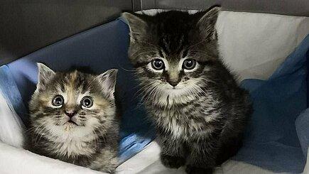Kitten im Tierheim Zossen