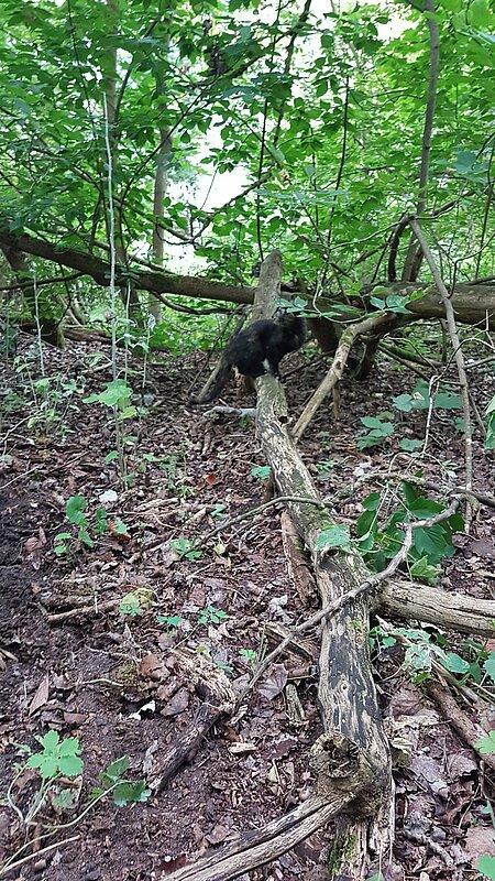 Die Katze war zunächst panisch in den Wald gelaufen
