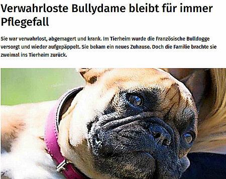 12. Juli 2019   Märkische Allgemeine Zeitung   Verwahrloste Bullydame bleibt für immer Pflegefall
