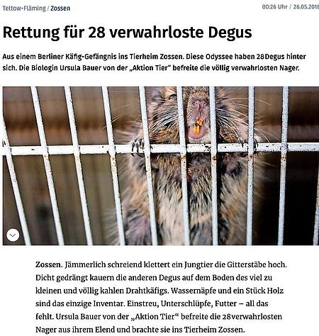 26. Mai 2018   Märkische Allgemeine   Rettung für 28 verwahrloste Degus