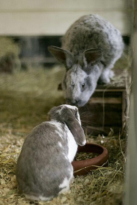 Käfighaltung für Kaninchen ist für uns tabu
