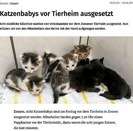 03. Juni 2019   Märkische Allgemeine   Katzenbabys vor Tierheim ausgesetzt