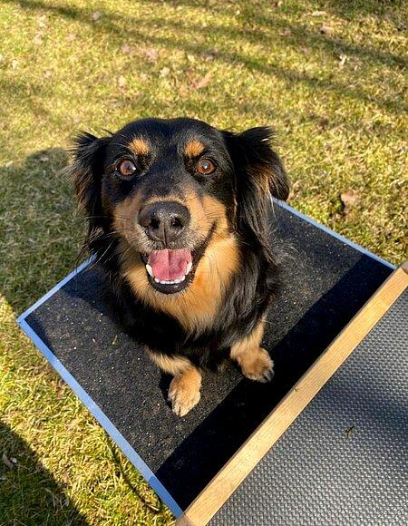 Hund Baloo ist sichtlich stolz auf seine Leistung.