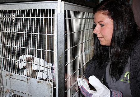 Tierpflegerin Myriam Laser fängt die Tiere vorsichtig ein