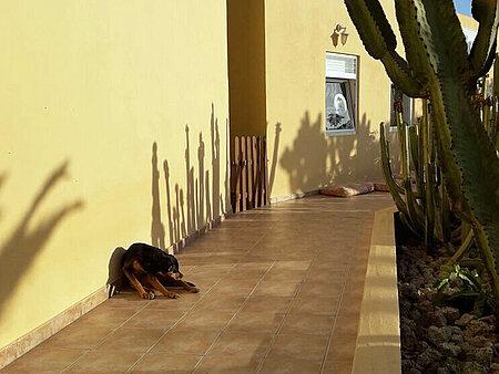 Hund döst vor dem Tierheimgebäude
