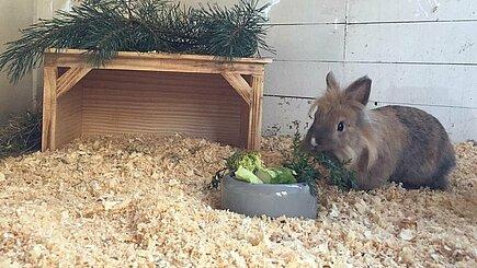 Neue Kaninchenhäuser